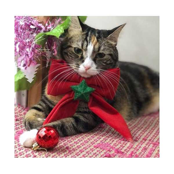 Kedi Tasması ( Gift )