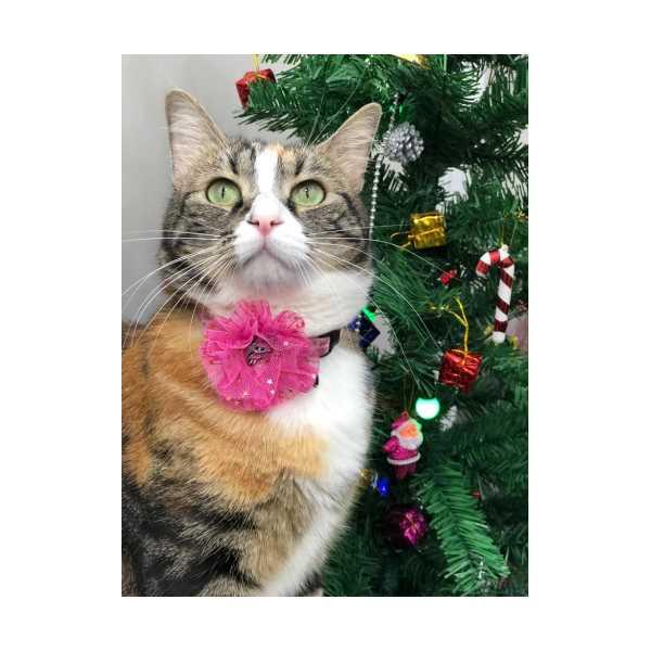 Kedi tasması ( Pinky Lol )