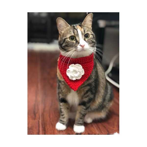 Kedi Tasması ( Örgü Kedi Şalı )