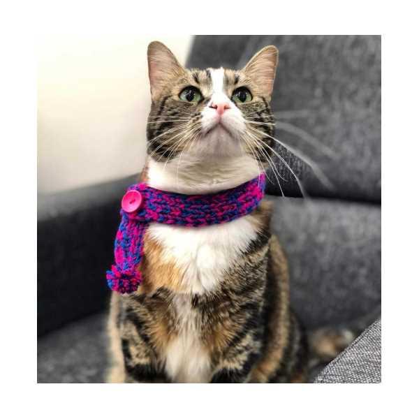 Kedi Tasması ( Örgü Kedi Şalı)